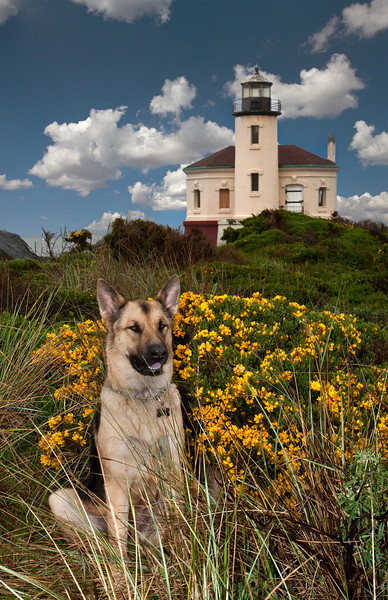 CODY AT THE COQUILLE  LIGHTHOUSE, OREGON