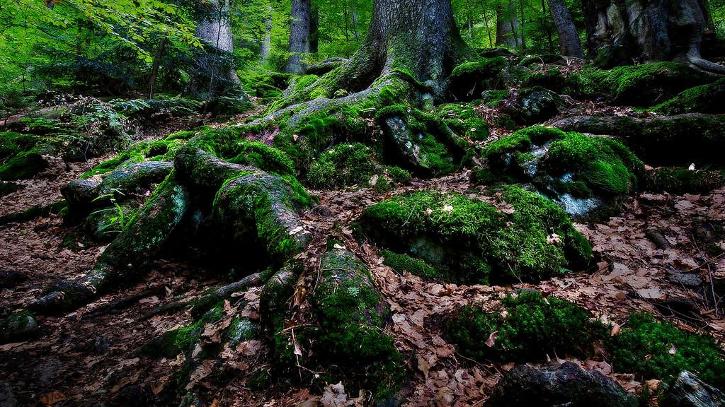Bayerischer Wald; Germany