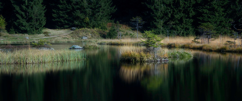 Floating Islands; Kleiner Arbersee; Bayerischer Wald; Germany