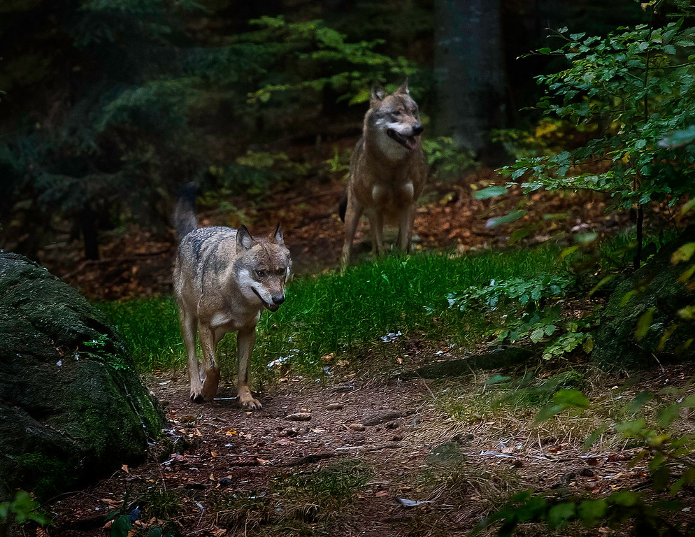 Nationalpark Bayerischer Wald; Germany
