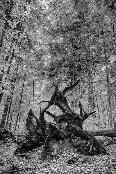 Zwieslerwaldhaus; Wazlikhain; Bayerischer Wald; Germany