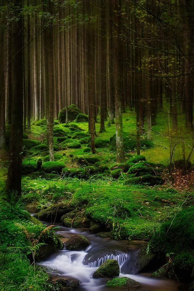 Regenhänge; Bayerischer Wald; Germany