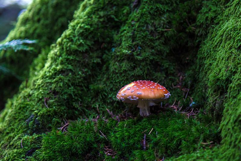 Tegernsee - on the trail - mushrooms 3-4678