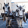 Carriage horses - Saltzburg