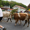 Tegernsee, Germany - cow parade