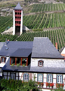 Germany, Rhine River vinyards
