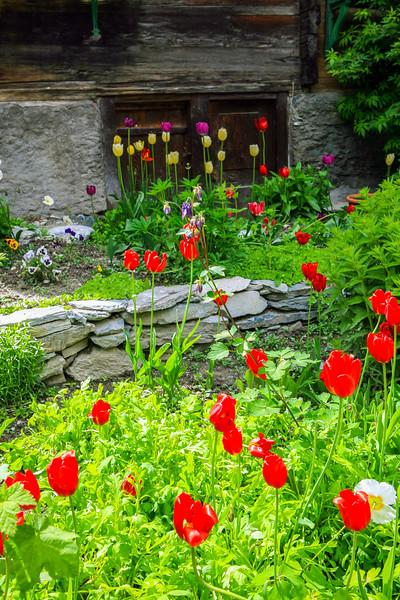 Flowers in Zermatt