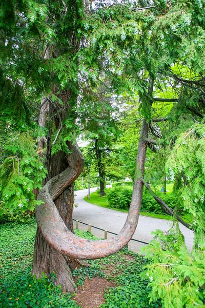 Park in Geneva, Switzerland