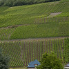 Vineyards Along the Rhine