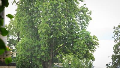 Regen auf der Mathildenhöhe