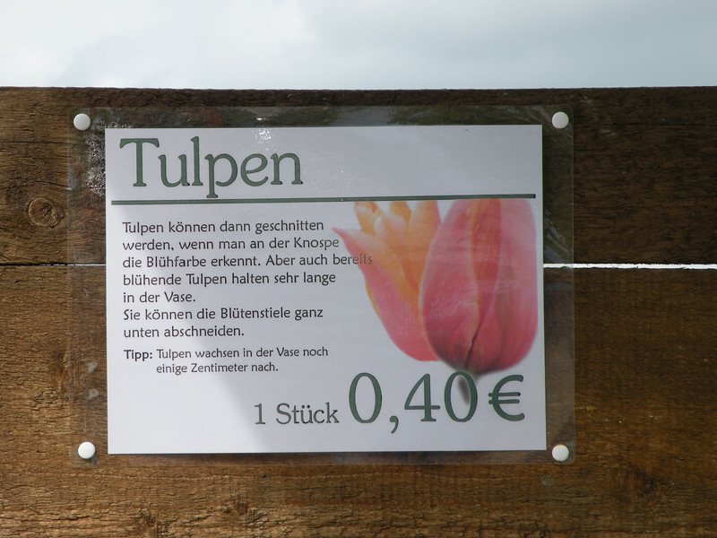 "Everywhere you drive this time of the year there are fields of flowers.  People come to ""Blumen"" fields to cut a bouquet of wild tulips for 40 cents a stem.  It's the honor system at work.  Drive up, park the car, plop your change into the can and snip away."