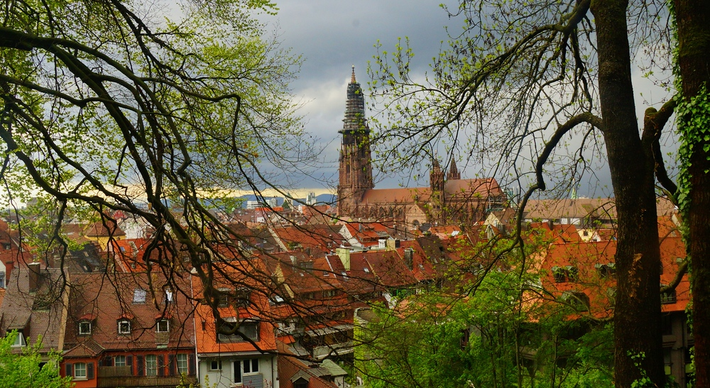 The best views of Freiburg were from the forest trail.