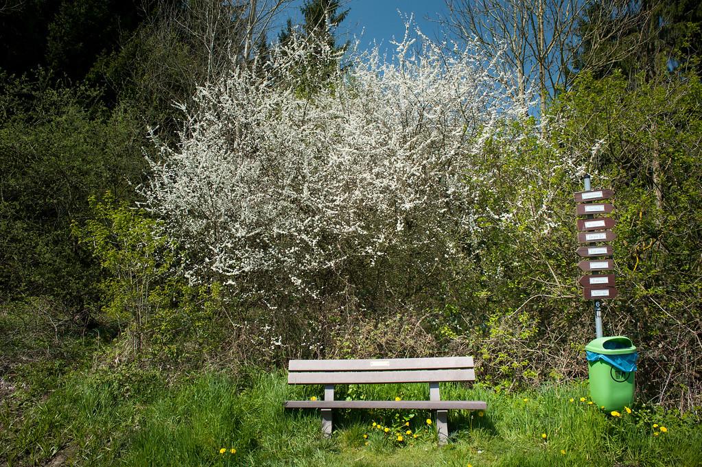Dornburg-Frickhofen (Germany) May 2016