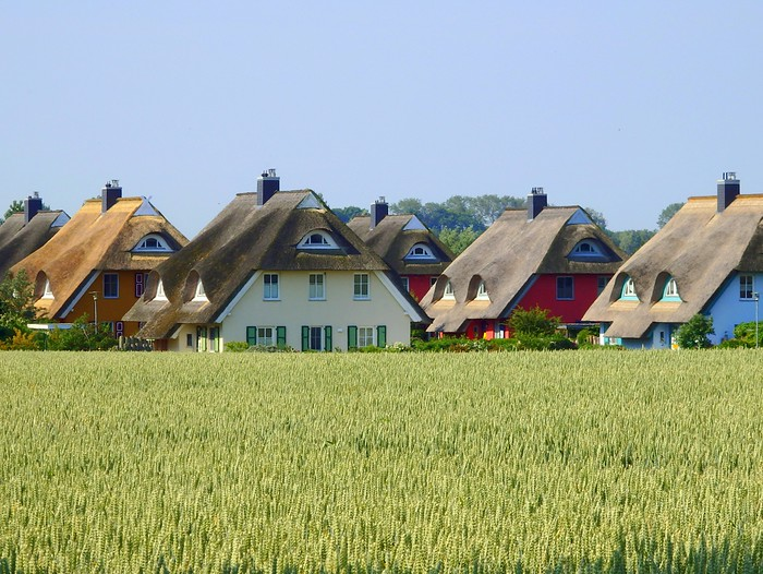 Cottages with reed roofs in Fischland-Darß-Zingst
