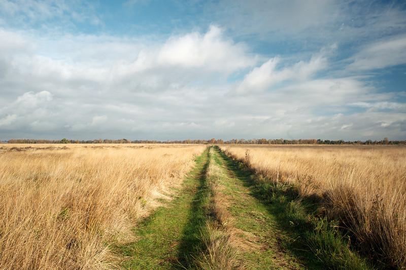Recker Moor (Germany) November 2013