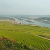 R17 vinyards above Rüdesheim