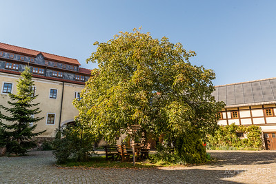 Sachsen-Elbland_2847