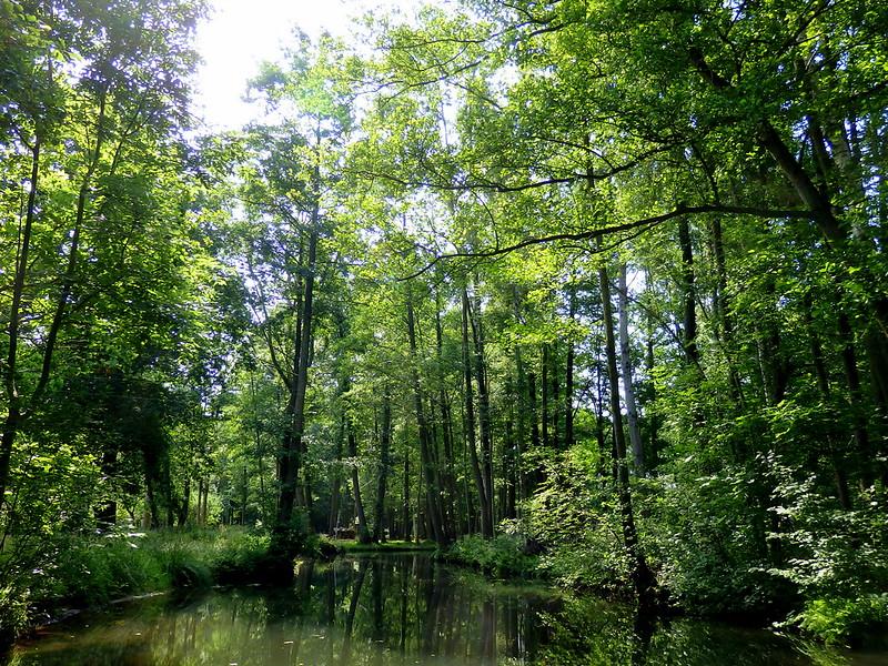 Punting through Spreewald