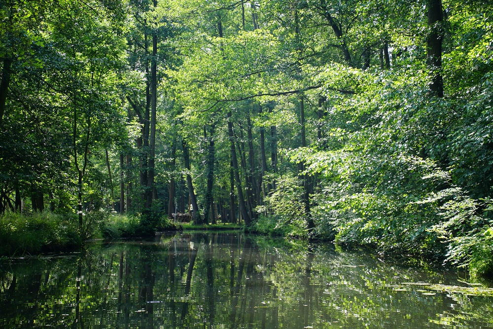 Scenic forest we encountered while punting down canals in Spreewald, Germany