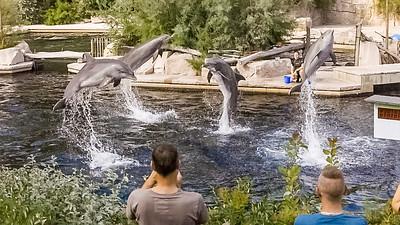 Große Tümmler in der Delphinlagune des Tiergartens Nürnberg, Präsentation am 26. August 2017
