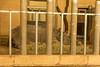 Sanjai, das Panzernashorn im Tiergarten Nürnberg