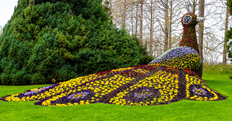 Mainau Floral Peacock