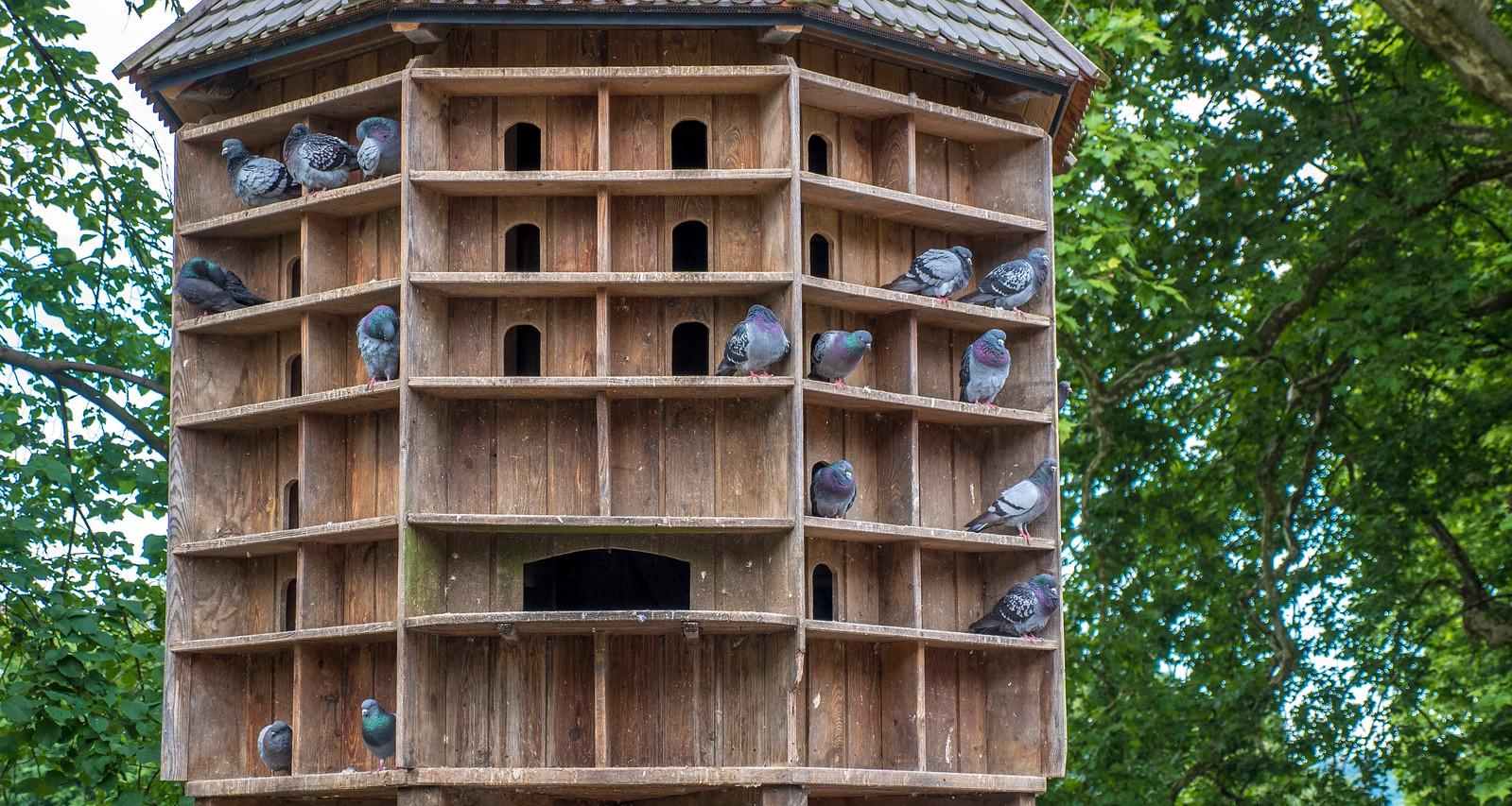 Pigeon house. Things to do in Tubingen Germany.