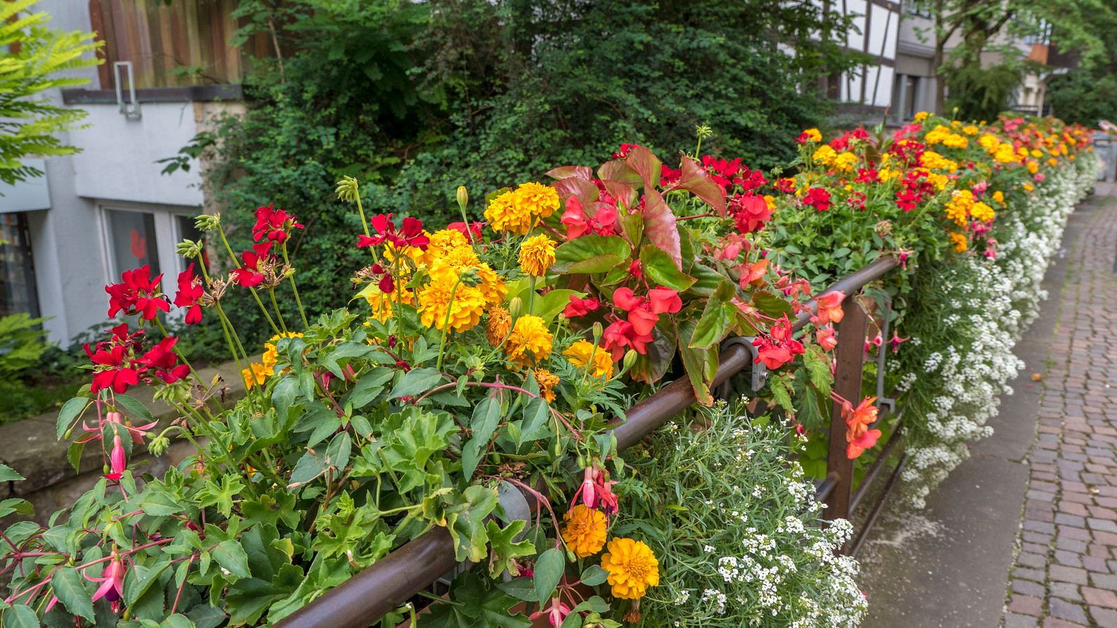 Colourful flowers in Tubingen, Germany. Things to do in Tubingen Germany.