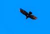 Krähe am Dutzendteich