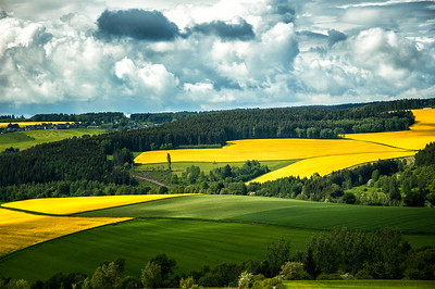 Richards___Mustard Fields of Northern Germany