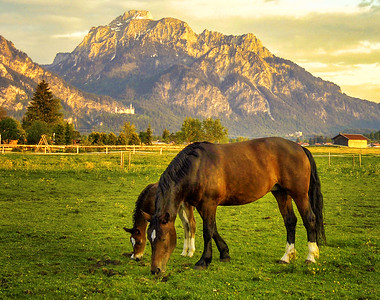 Kemmerer___A Pastoral scene with Mt. Tegel and Neuschwanstein