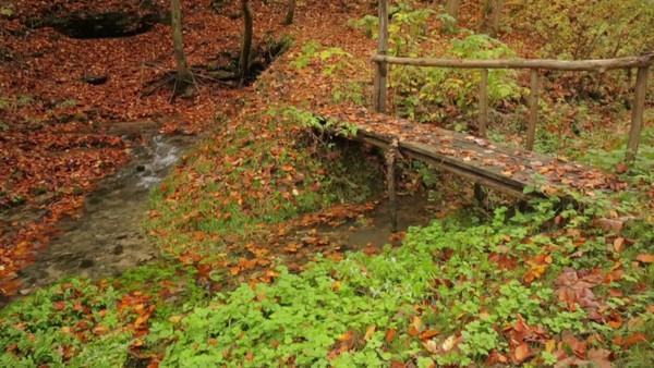 Bridge over creek with autumn leaves, Thalheim, Franconia