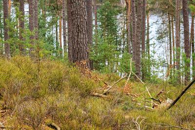 Kulmbergweiher