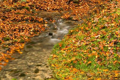 Creek with autumn leaves, Thalheim, Franconia
