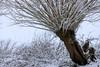 Baum im Schnee, Beerbach