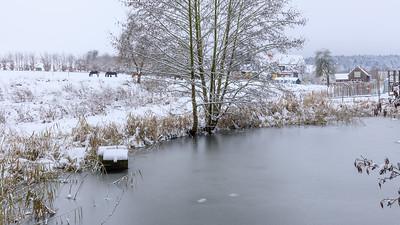 Pferde am Teich im Schnee, Beerbach