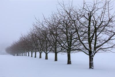 Kirschbäume im Schnee bei Simmelsdorf