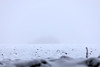Feld im Schneegestöber bei SImmelsdorf