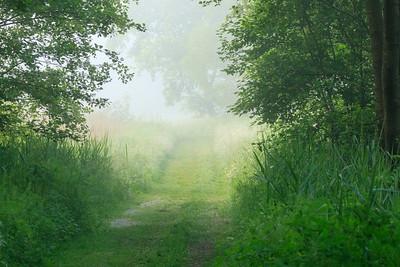 Fußweg zum Kammerweiher