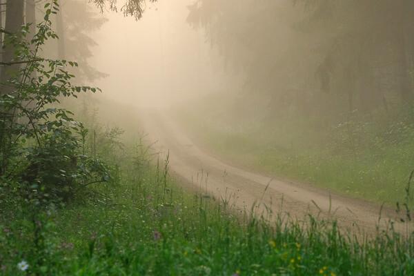 Feldweg zum Kammerweiher