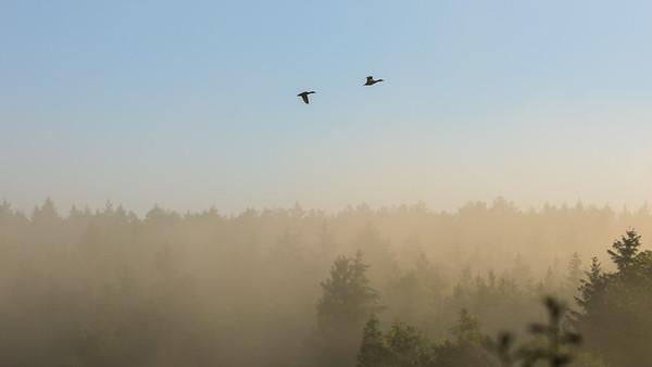 Enten im Morgenlicht am Kammerweiher