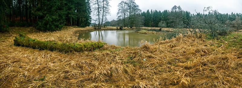 Wetlands in the Pegnitz valley