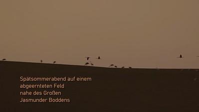 Im letzten Licht fliegen Kraniche zu ihren Schlafplätzen am Jasmunder Bodden, Rügen