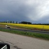 """We wondered what all the bright yellow was as we zipped by. It is Canola """"Raps."""" Some other cars went by at probably 160 mph. Our top speed for the trip was likely 120 mph"""