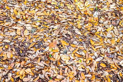 Leaves...me