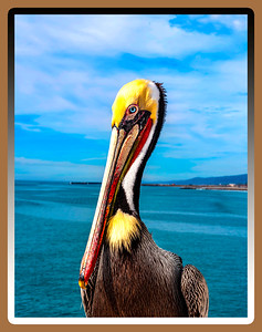 """""""The Pelican...Briefly..."""""""