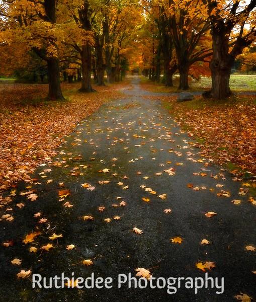 Autumn's Glow