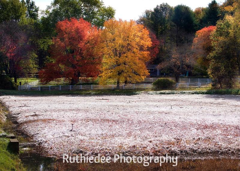 cranberry bog, Middleboro.jpg