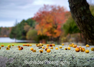 Autumn's Offer~