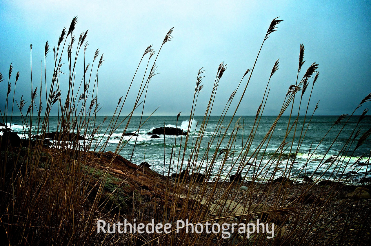 Through shoreline grasses...<br /> <br /> Gloucester, MA
